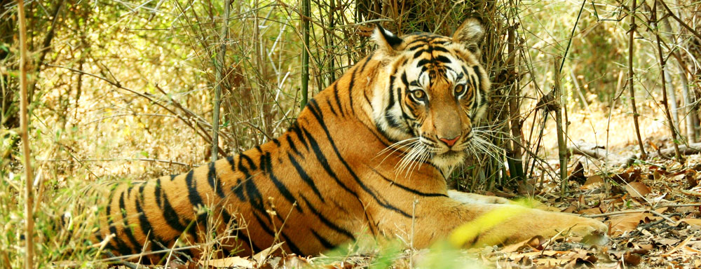 jungle_safari_tour